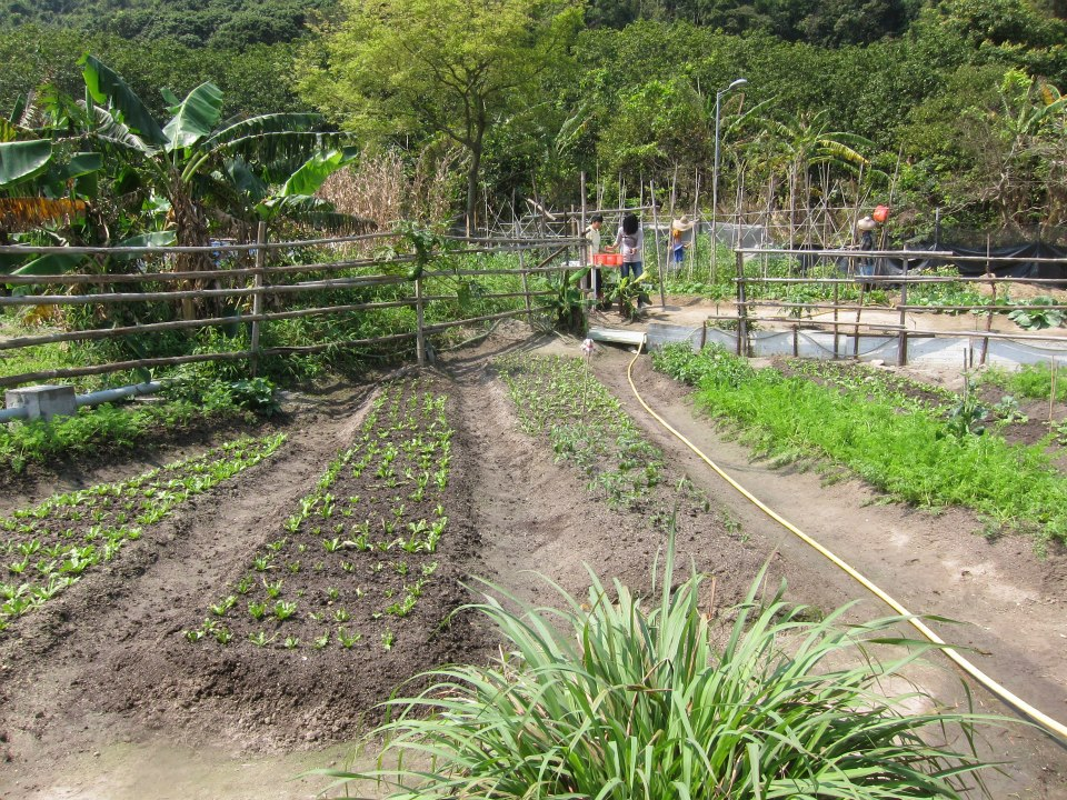 Mui Wo Island's organic farm uses compost collected from machine as fertilizer