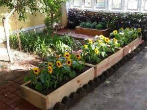 Organic farm at Ho Lap College